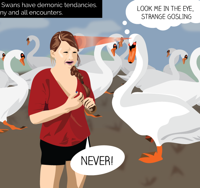 Avoid swan confrontations